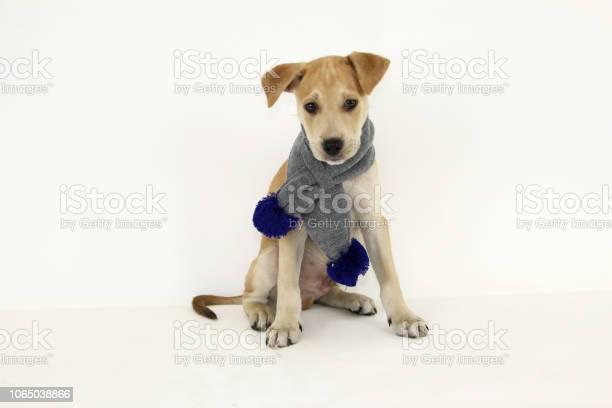 Holiday pets picture id1065038866?b=1&k=6&m=1065038866&s=612x612&h=8fjxcaic5hlv8ctpdjpj9l8rb6mhk4kqrc m3ti3ib0=