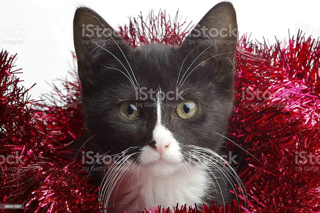 Holiday Surprise royalty-free stock photo