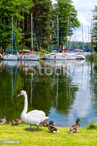 Holidays in Poland - rest by the Nidzkie lake in Masuria, land of a thousand lakes
