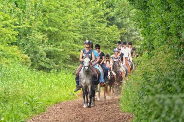 holanda, renesse. 27.05.2017. un grupo de turistas hace un paseo a caballo por el bosque. - equitación fotografías e imágenes de stock