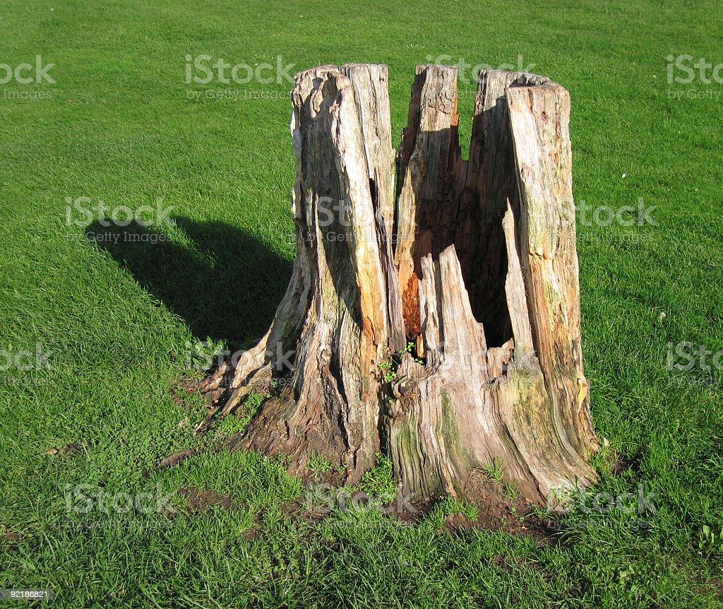 Hollow tree stump royalty-free stock photo