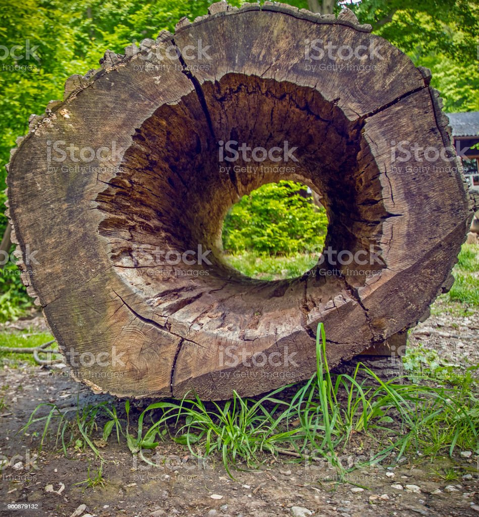 a9f385f5526fc Hollow Tree Trunk In The Forest Summer Bright Day Stock Photo & More ...