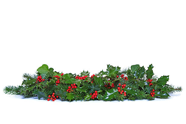 Holly and ivy christmas garland isolated picture id503179581?b=1&k=6&m=503179581&s=612x612&w=0&h=inbmlrrrqh7 ugqdkbt1ic3oupuxuzqr7yt4i9fadk8=