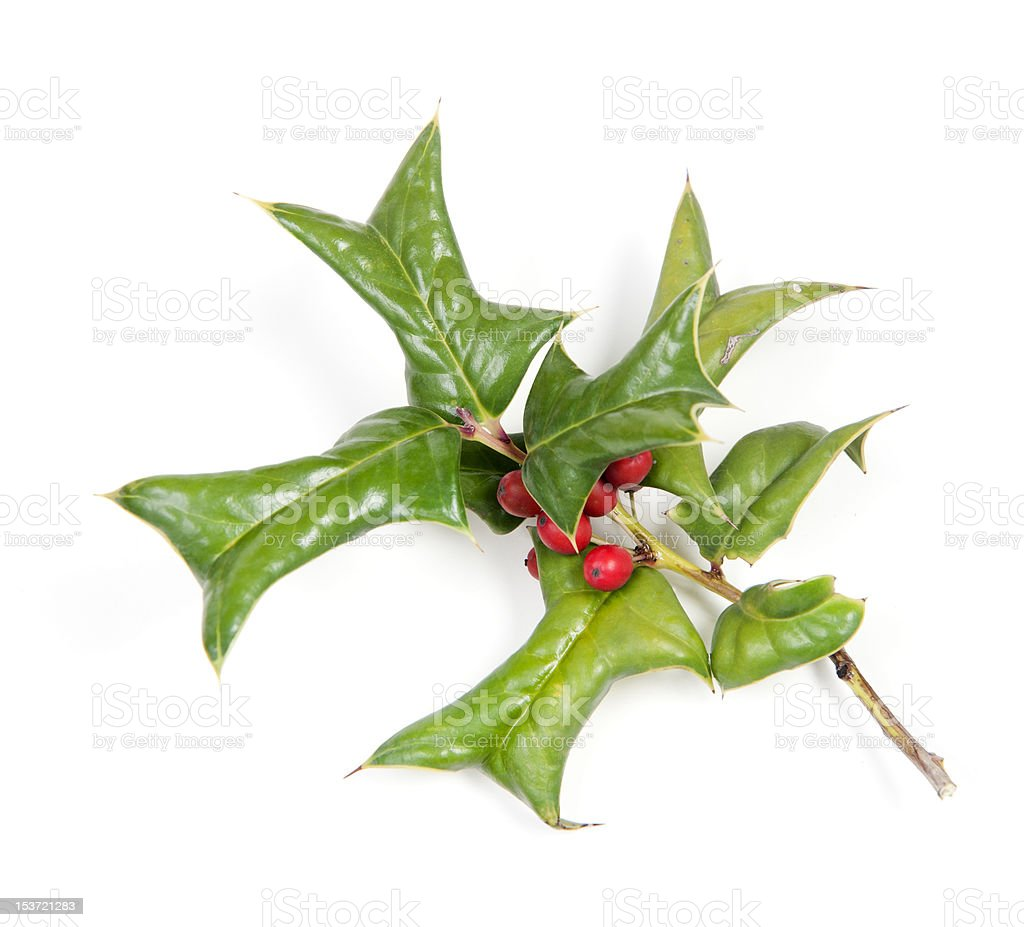 Holly berries and leaves isolated on white for christmas royalty-free stock photo