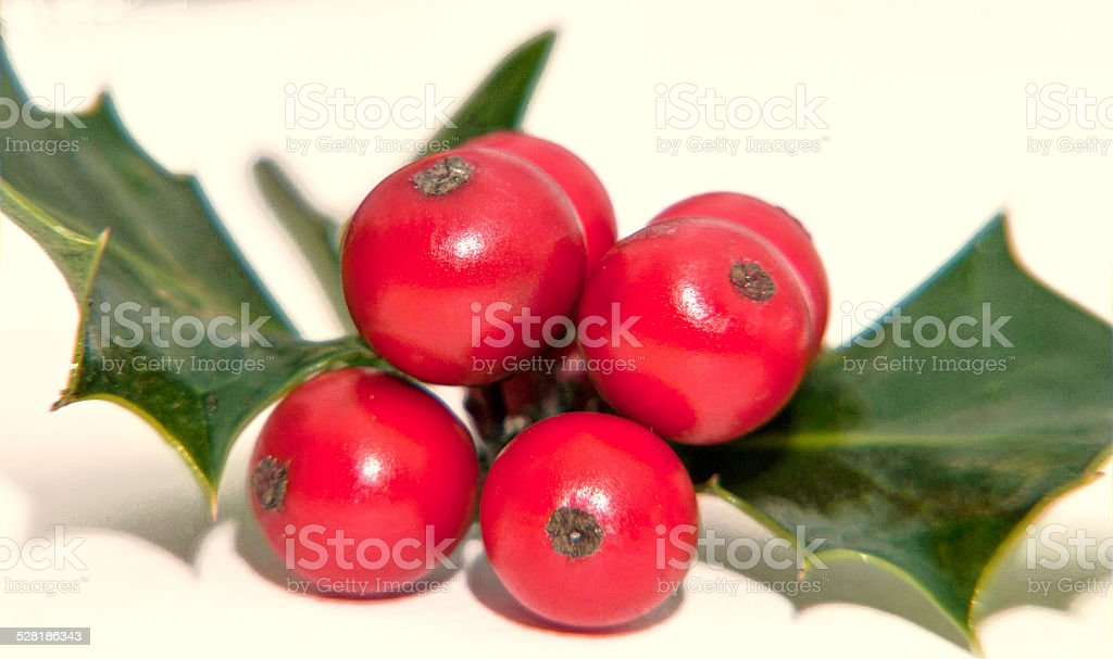Holly berries close up stock photo