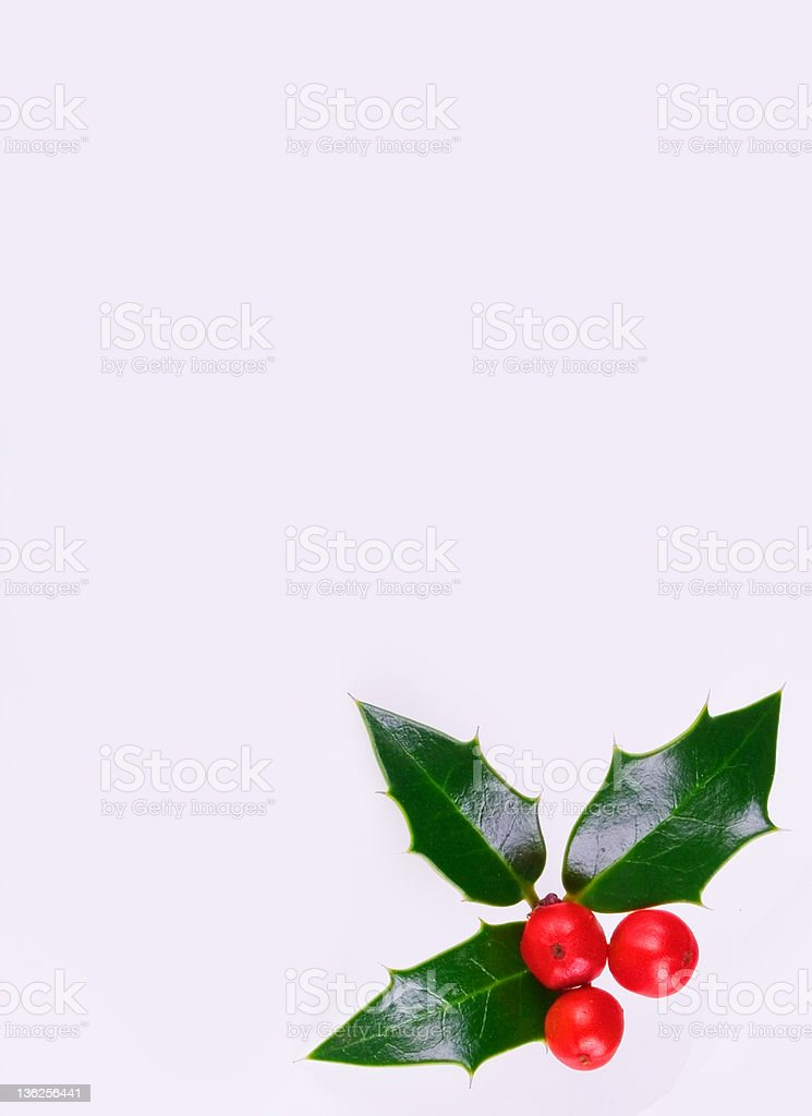 holly berries royalty-free stock photo