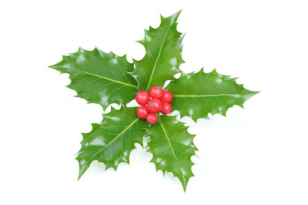 Holly Christmas decoration stock photo