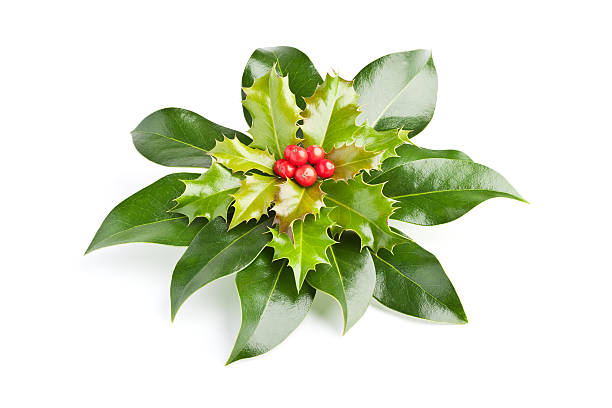 Holly decoration stock photo