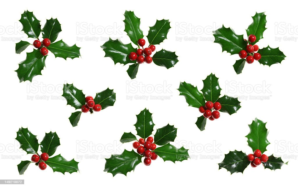 Holly Isolated on White stock photo