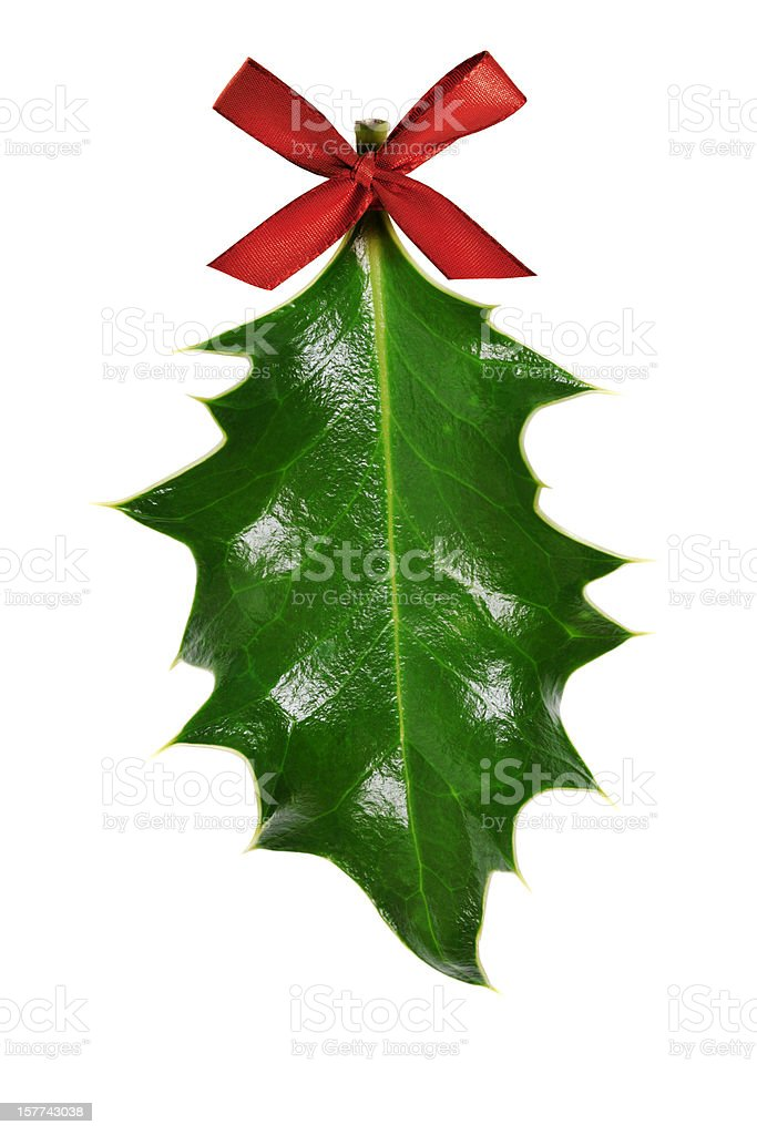 Holly Leaf with Red Ribbon, Isolated on White royalty-free stock photo