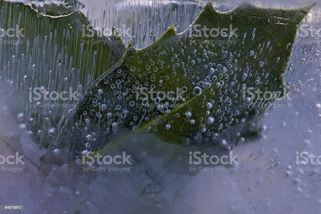 Holly Leaves Frozen in Ice royalty-free stock photo