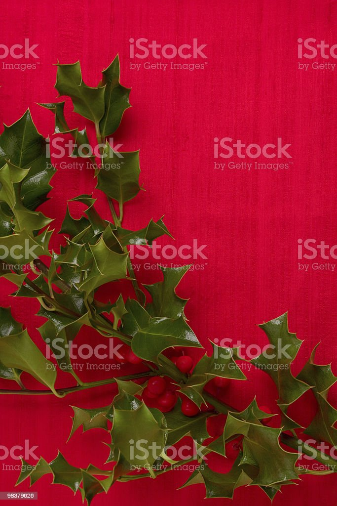 Holly foto stock royalty-free