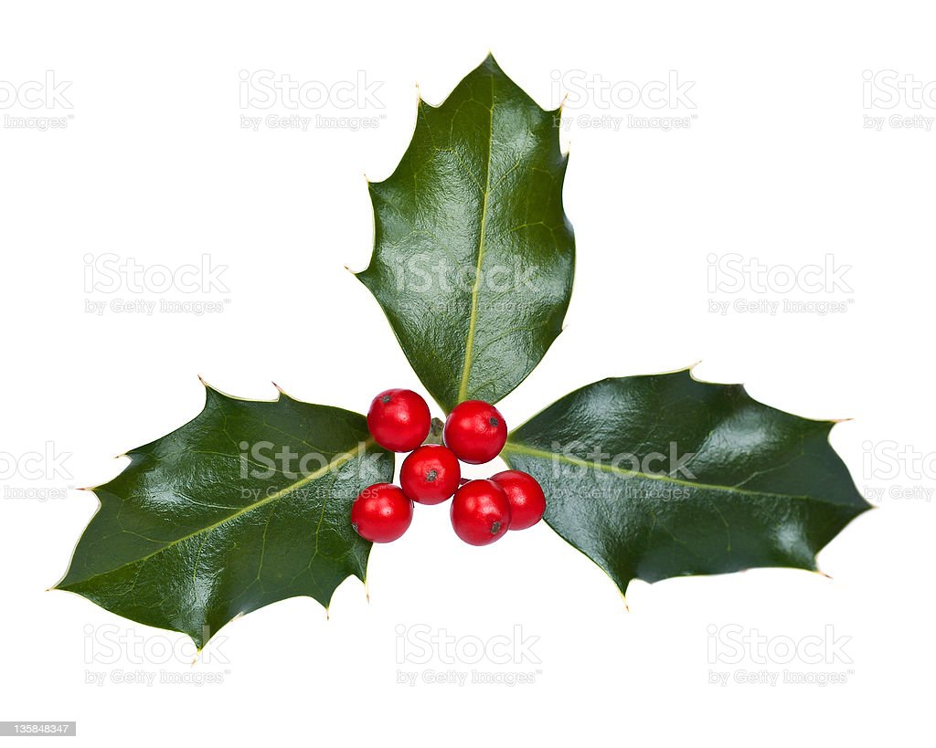 Holly with Berries royalty-free stock photo