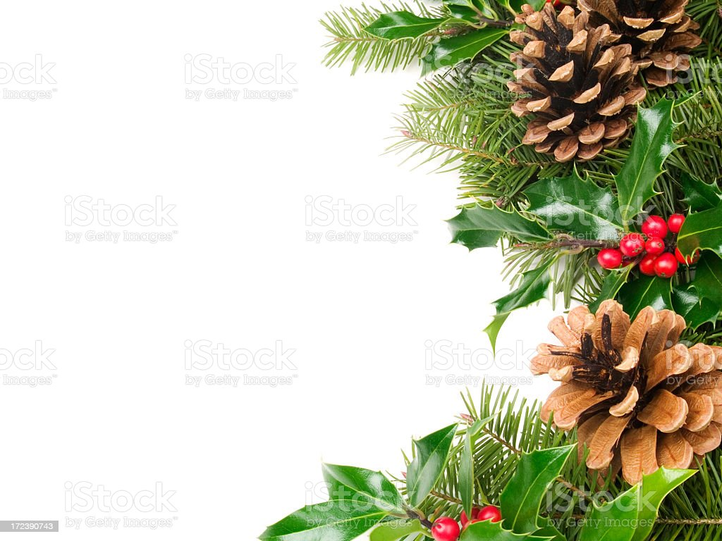 holly with pine cones royalty-free stock photo
