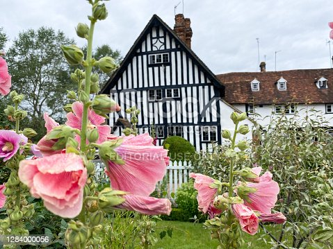 Hollyhocks in Eynsford, England, with a house with Tudor revival architecture in the background