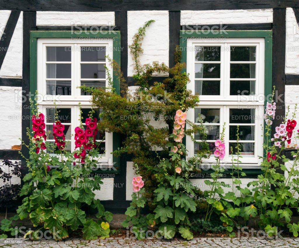 Roses trémières en dehors d'un vieux chalet à Warnemünde - Photo