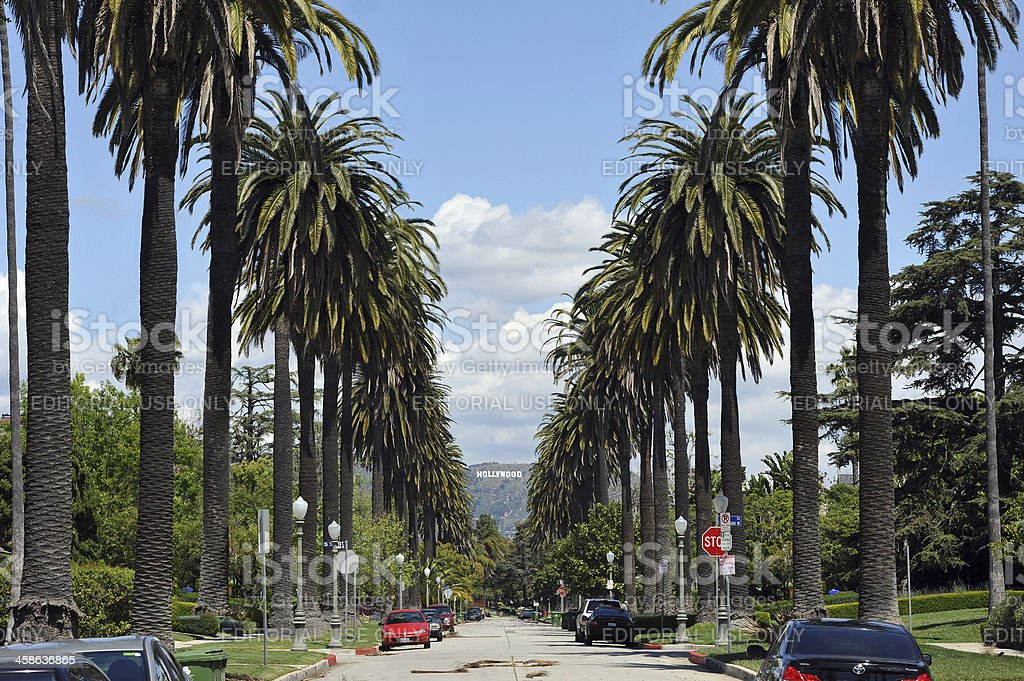 Hollywood Palms And Sign Royalty Free Stock Photo