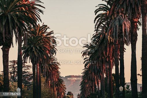 istock Hollywood Sign Framed with Palm Trees 1231784763