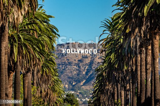 19 october 2018 - Los Angeles, California. USA: Hollywood Sign between Palm trees from central Los Angeles