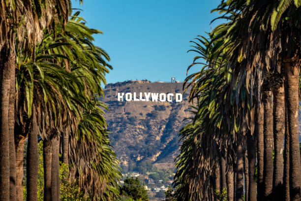 Hollywood Sign from Central LA 19 october 2018 - Los Angeles, California. USA: Hollywood Sign between Palm trees from central Los Angeles hollywood california stock pictures, royalty-free photos & images