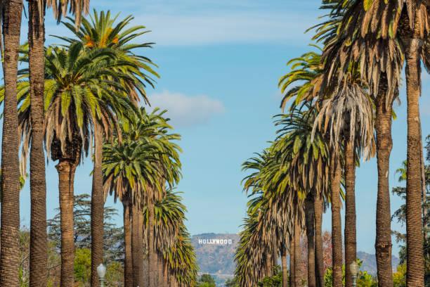 hollywood-skylten i los angeles kalifornien usa - hollywood sign bildbanksfoton och bilder