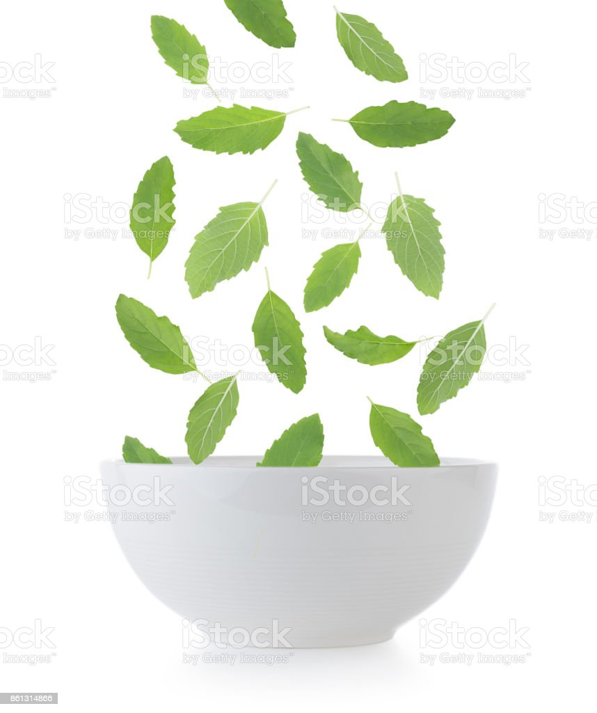 Holy basil in bowl on white background stock photo