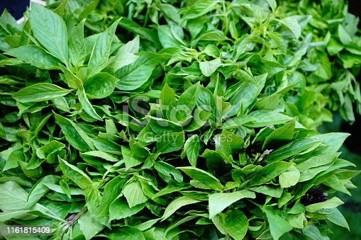 Plant, Antidote, Food, Medicine, Basil