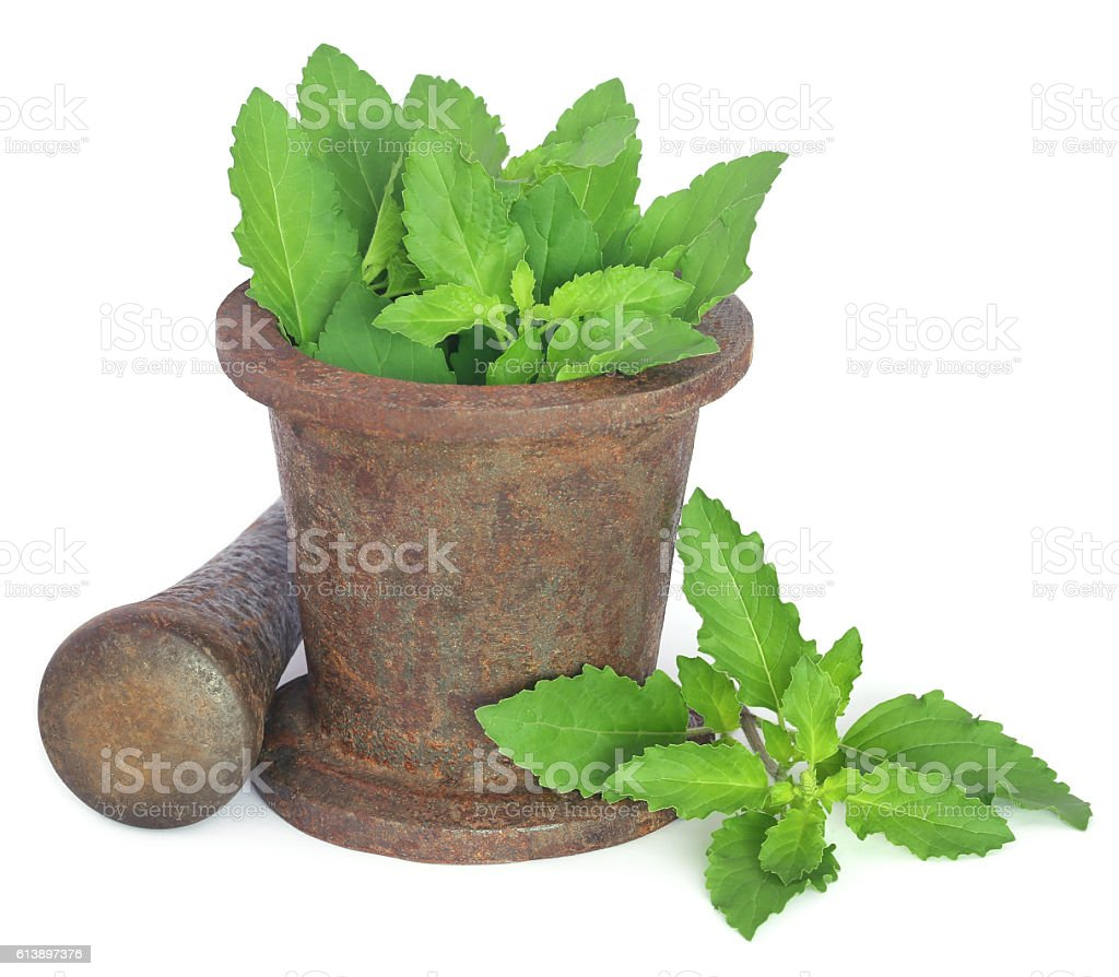 Holy basil or tulsi leaves in a vintage mortar stock photo