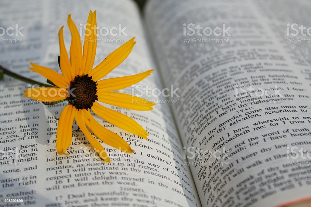 Holy Bible with yellow flower stock photo