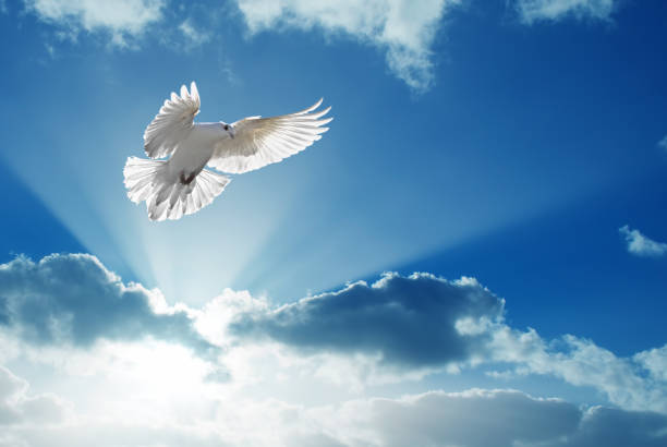 Holy Spirit dove flies in blue sky stock photo