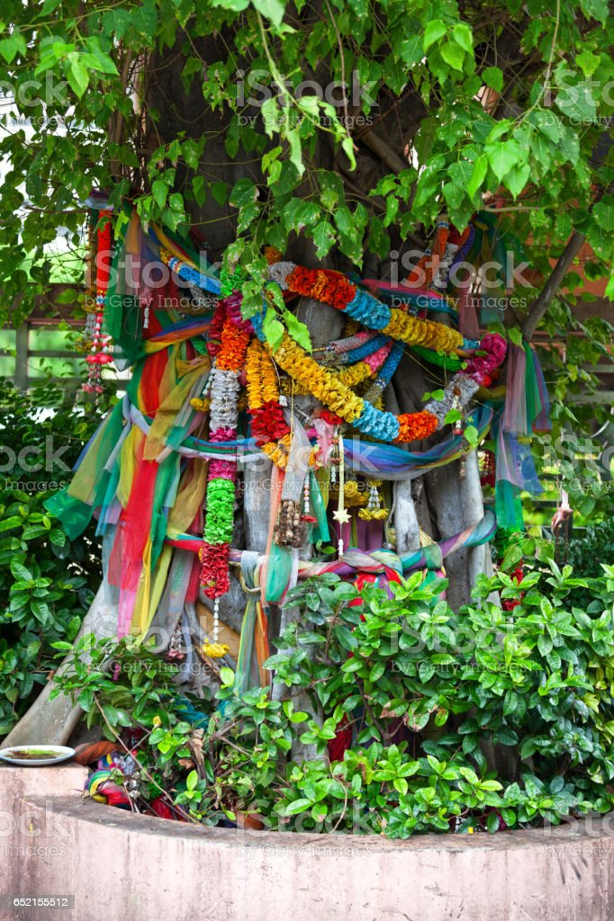 Holy tree in Bangkok stock photo