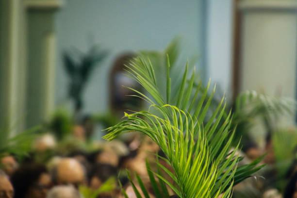 Holy Week Palm Sunday stock photo