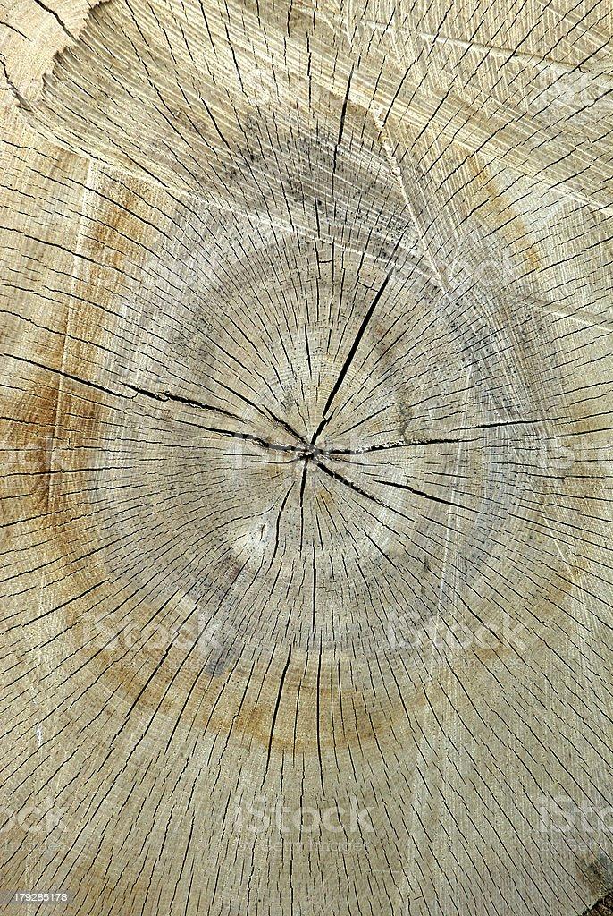 Holz stock photo