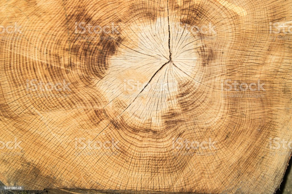 Holz und Jahresringe stock photo