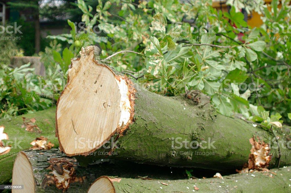 Holzeinschlag stock photo