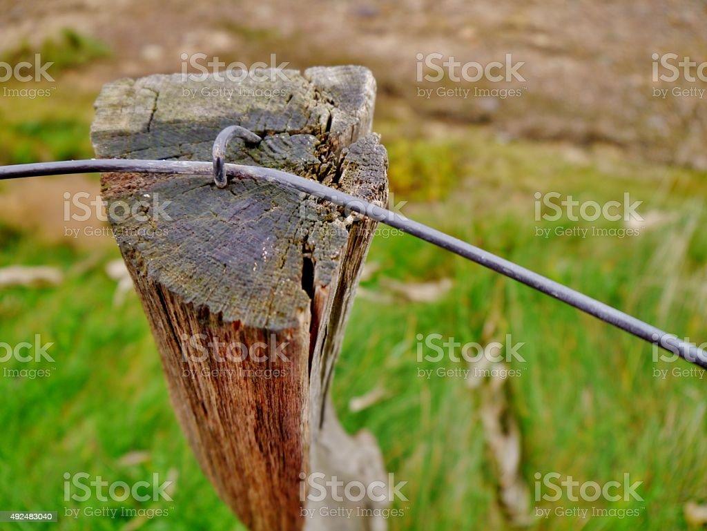 Holzpfahl Mit Drahtkrampe – Foto
