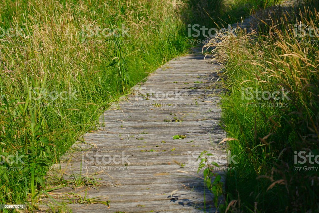 Holzplanken16jHB002.JPG stock photo