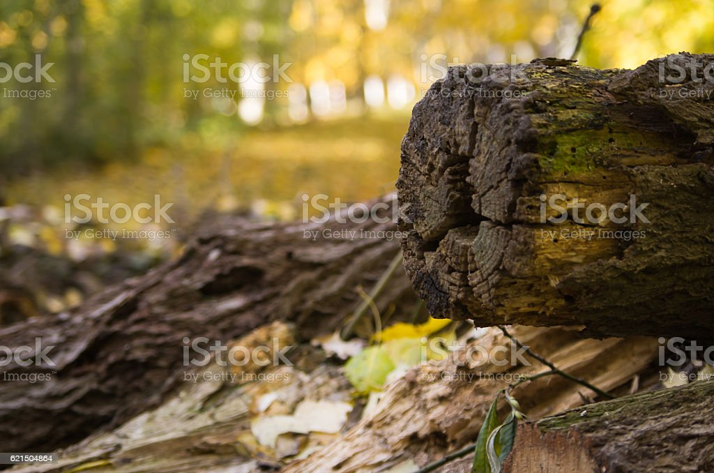 Holzstamm foto stock royalty-free