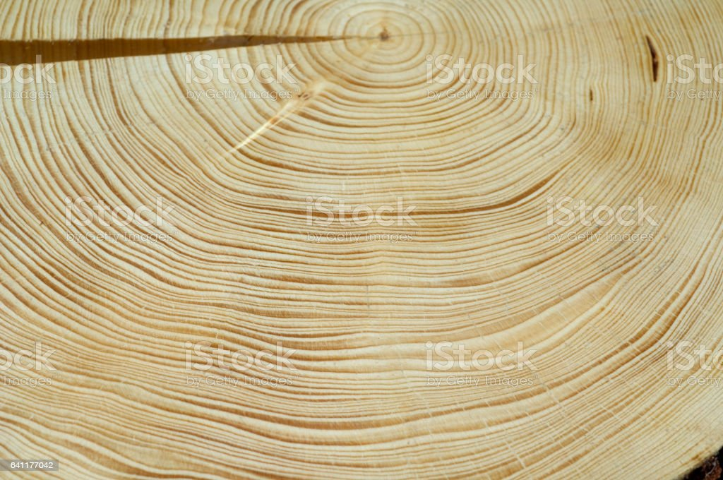 Holzstamm, Ringe - foto de stock