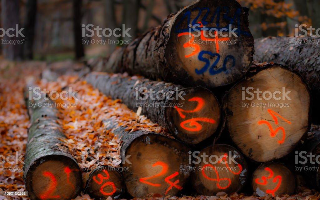 Holzstapel – Foto