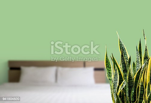 Home and garden concept of sansevieria trifasciata or Snake plant in the bedroom