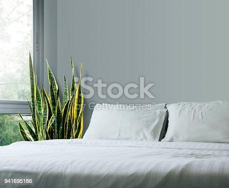 istock Home and garden concept of sansevieria trifasciata or Snake plant in the bedroom 941695186