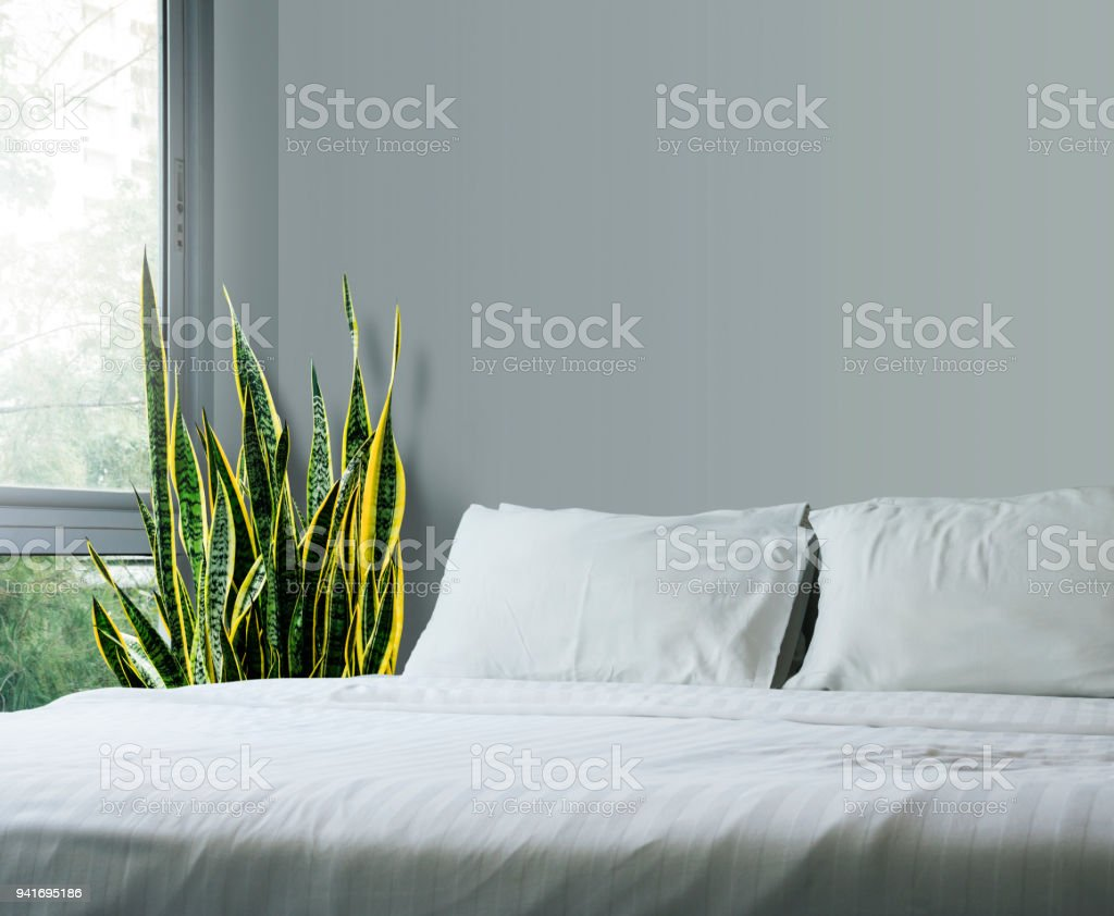 Concepto de hogar y del jardín de sansevieria trifasciata o planta de la serpiente en el dormitorio - foto de stock