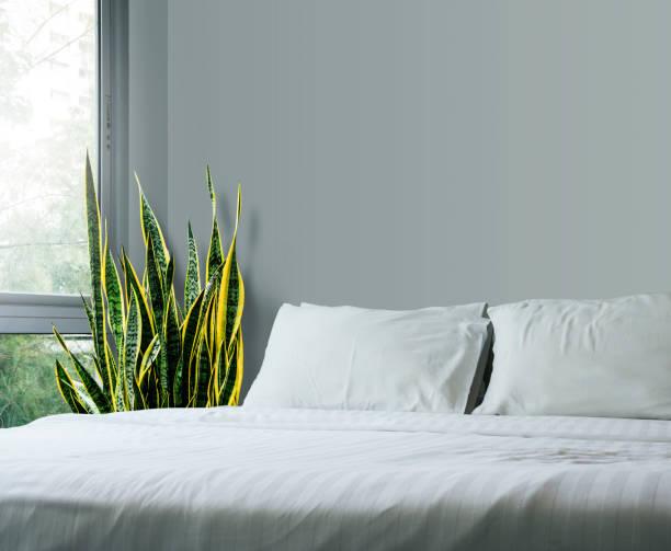concept maison et le jardin de sansevieria trifasciata ou serpent plante dans la chambre à coucher - serpent photos et images de collection