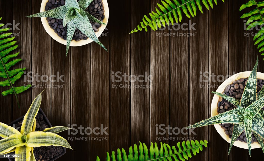 Home and garden concept of top view air plant on wood background with copy space flat lay style stock photo