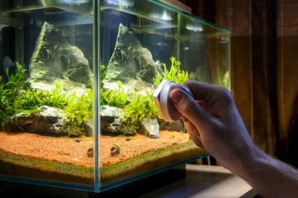 home aquarium cleaning using magnetic fish tank cleaner - home aquarium stock pictures, royalty-free photos & images