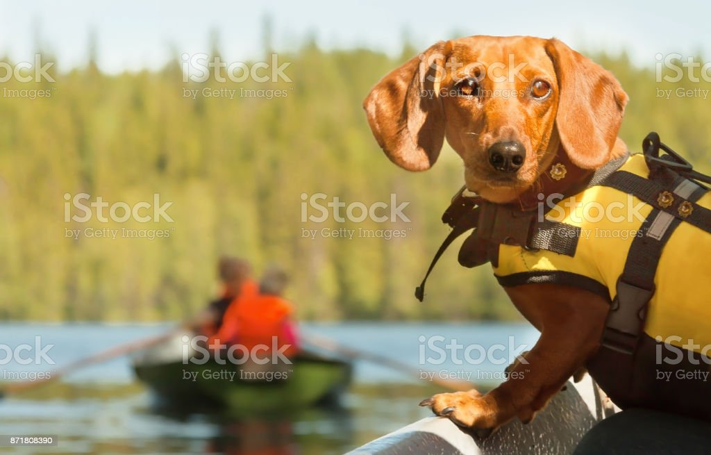 Home away from Home. Dog Boat Travelling. stock photo