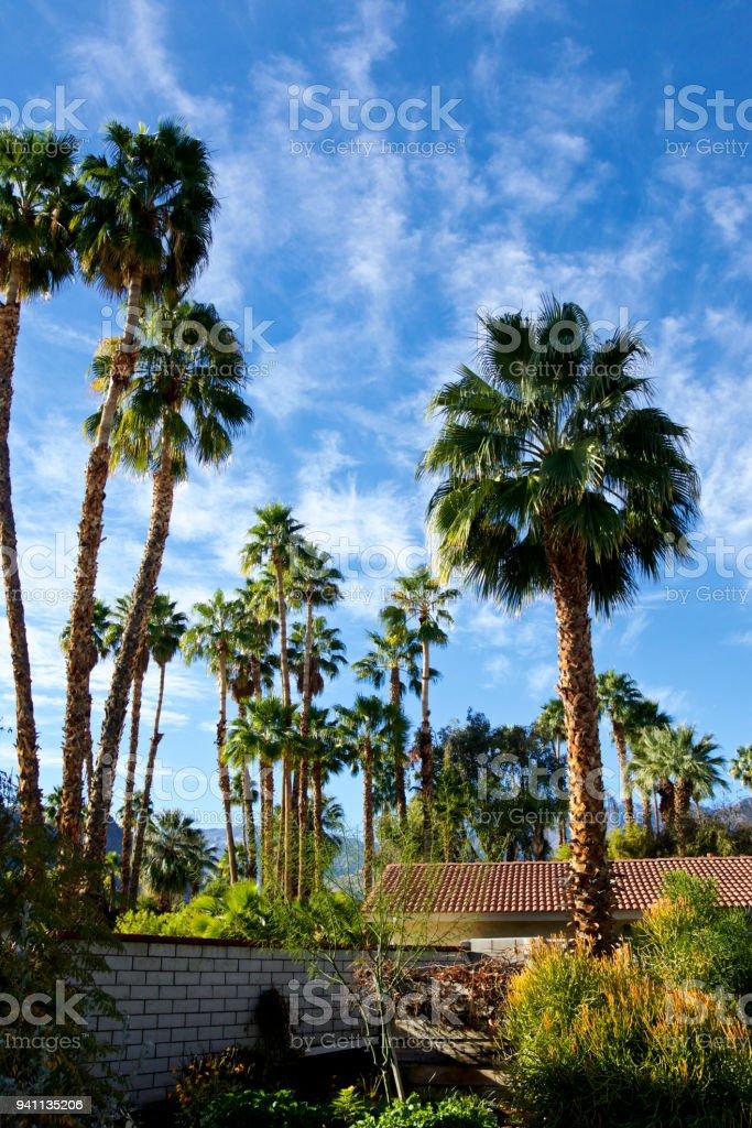 Haus U0026 Hinterhof Wüstenpflanzen, Palm Springs Landschaft, Southern  California, USA Lizenzfreies Stock