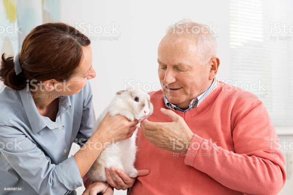 Home caregiver with senior man and a little rabbit stock photo