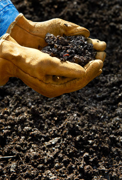 Home Composting, Hand holding compost soil Hand holing Soil created from Home Composting kitchen scraps or vegetables and fruit along with fall leaves and grass clippings.  Final product dark brown earth rich with nutrients and worms to spread around the garden. burwellphotography stock pictures, royalty-free photos & images